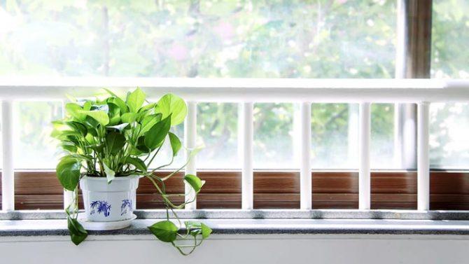 Grünpflanzen zu Hause