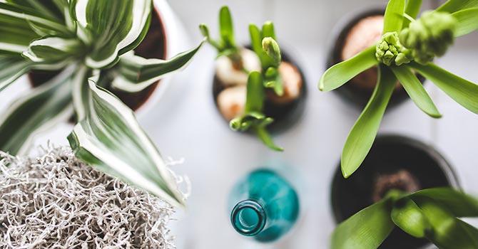 Grüne Einrichtung 2019