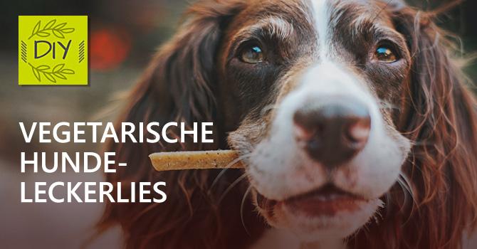 DIY Hundeleckerlies: Vegetarische Hunde-Kekse als Leckerbissen für zwischendurch