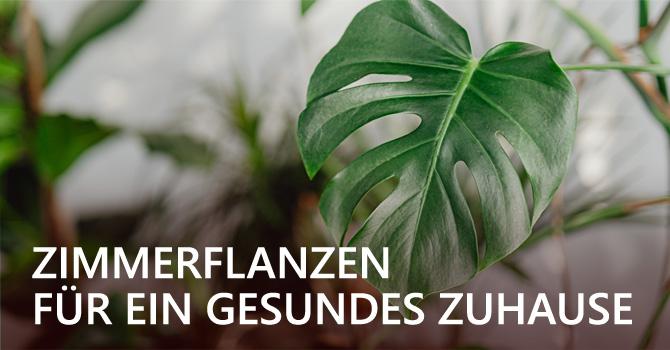 5 Zimmerpflanzen für ein gesundes Wohnklima